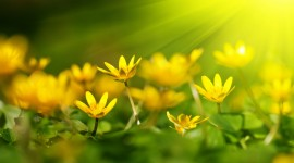 Flowers And Sunshine Wallpaper For PC