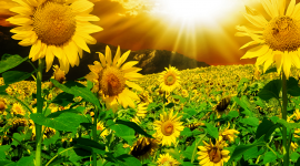 Flowers And Sunshine Wallpaper Gallery