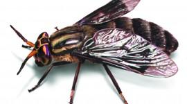 Fly Wallpaper 1080p
