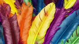 Goose Feathers Wallpaper Download