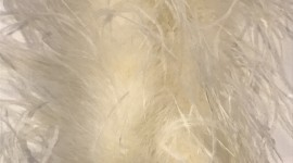 Goose Feathers Wallpaper For IPhone