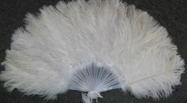 Goose Feathers Wallpaper Free