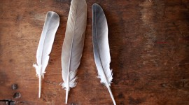 Goose Feathers Wallpaper Gallery