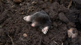 Mole Hole Wallpaper Full HD