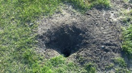 Mole Hole Wallpaper High Definition