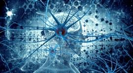 Neurons Best Wallpaper