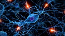 Neurons Desktop Wallpaper Free