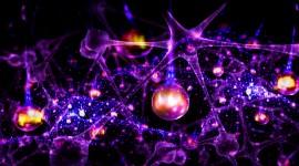 Neurons Desktop Wallpaper HD