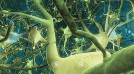 Neurons Wallpaper