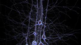 Neurons Wallpaper For IPhone