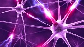 Neurons Wallpaper For PC