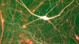 Neurons Wallpaper Free
