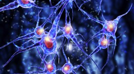 Neurons Wallpaper Full HD