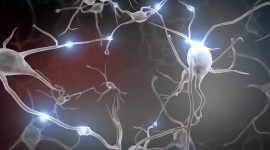 Neurons Wallpaper Gallery