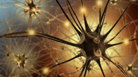 Neurons Wallpaper HD