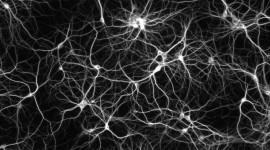 Neurons Wallpaper HQ