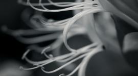 Neurons Wallpaper High Definition