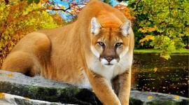 Puma Wallpaper For Desktop