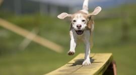 Puppy Nose Desktop Wallpaper