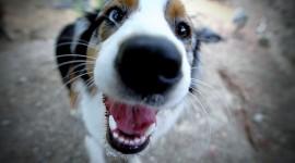Puppy Nose Desktop Wallpaper For PC