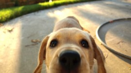 Puppy Nose Photo Download