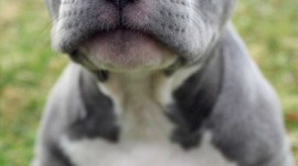 Puppy Nose Wallpaper For IPhone