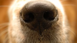 Puppy Nose Wallpaper Full HD