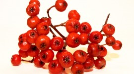 Rowanberry Best Wallpaper
