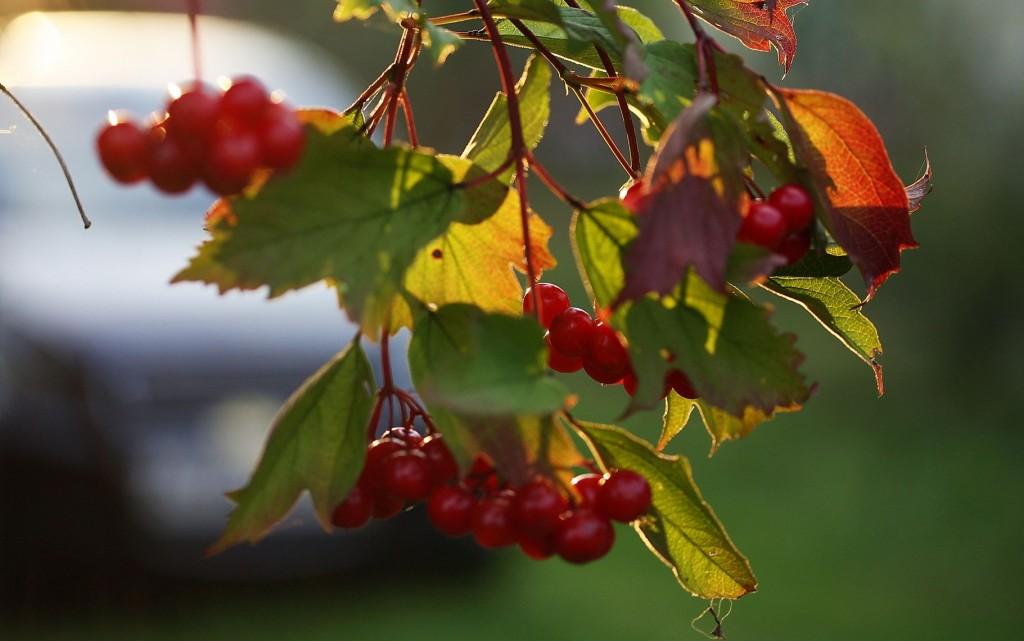 Rowanberry wallpapers HD