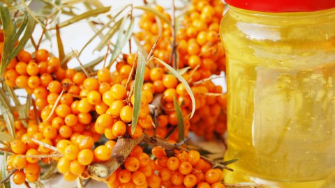 Sea Buckthorn wallpapers high quality