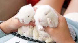 Sleeping Bunnies Desktop Wallpaper