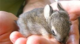 Sleeping Bunnies Photo Download