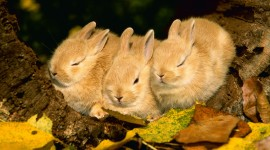 Sleeping Bunnies Wallpaper For Desktop