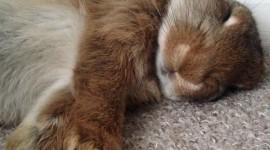 Sleeping Bunnies Wallpaper For IPhone
