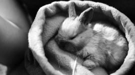 Sleeping Bunnies Wallpaper Full HD