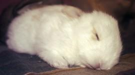 Sleeping Bunnies Wallpaper HQ