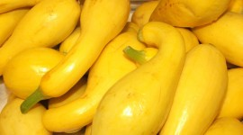 Squash Wallpaper Download Free