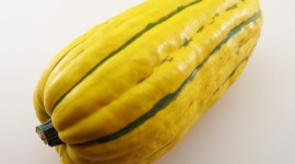 Squash Wallpaper High Definition
