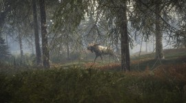 The Hunter Call Of The Wild Pics#4