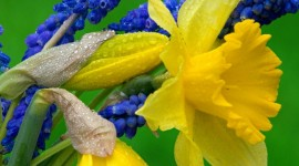 4K Hyacinth Photo Free
