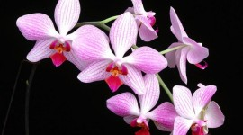 4K Orchid Photo Download#1
