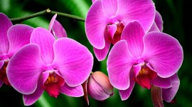 4K Orchid Wallpaper Gallery