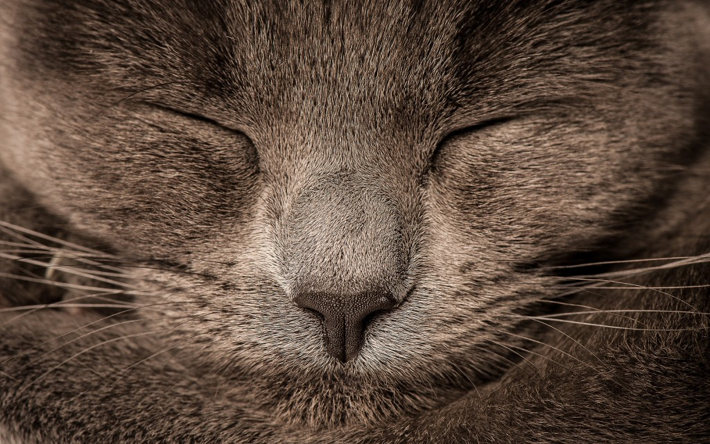 4K Sleeping Animals wallpapers HD