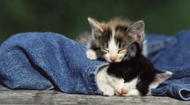 4K Sleeping Animals Desktop Wallpaper HD
