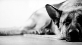 4K Sleeping Animals Photo