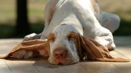 4K Sleeping Animals Photo Free