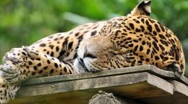 4K Sleeping Animals Photo Free#2