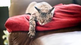 4K Sleeping Animals Photo#1