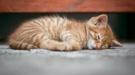 4K Sleeping Animals Photo#2