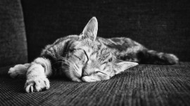 4K Sleeping Animals Wallpaper For Desktop